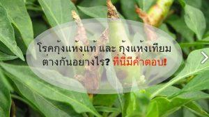 โรคกุ้งแห้งแท้ และกุ้งแห้งเทียมต่างกันอย่างไร_ ที่นี่มีคำตอบ!