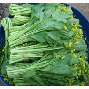 เมล็ด กวางตุ้ง(ดอก)