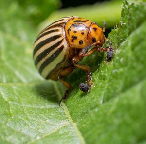 สารป้องกันกำจัดแมลง(แมลง)