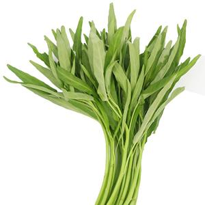 เมล็ดพันธุ์ผักบุ้ง