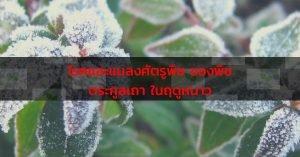โรคและแมลงศัตรูพืชในฤด